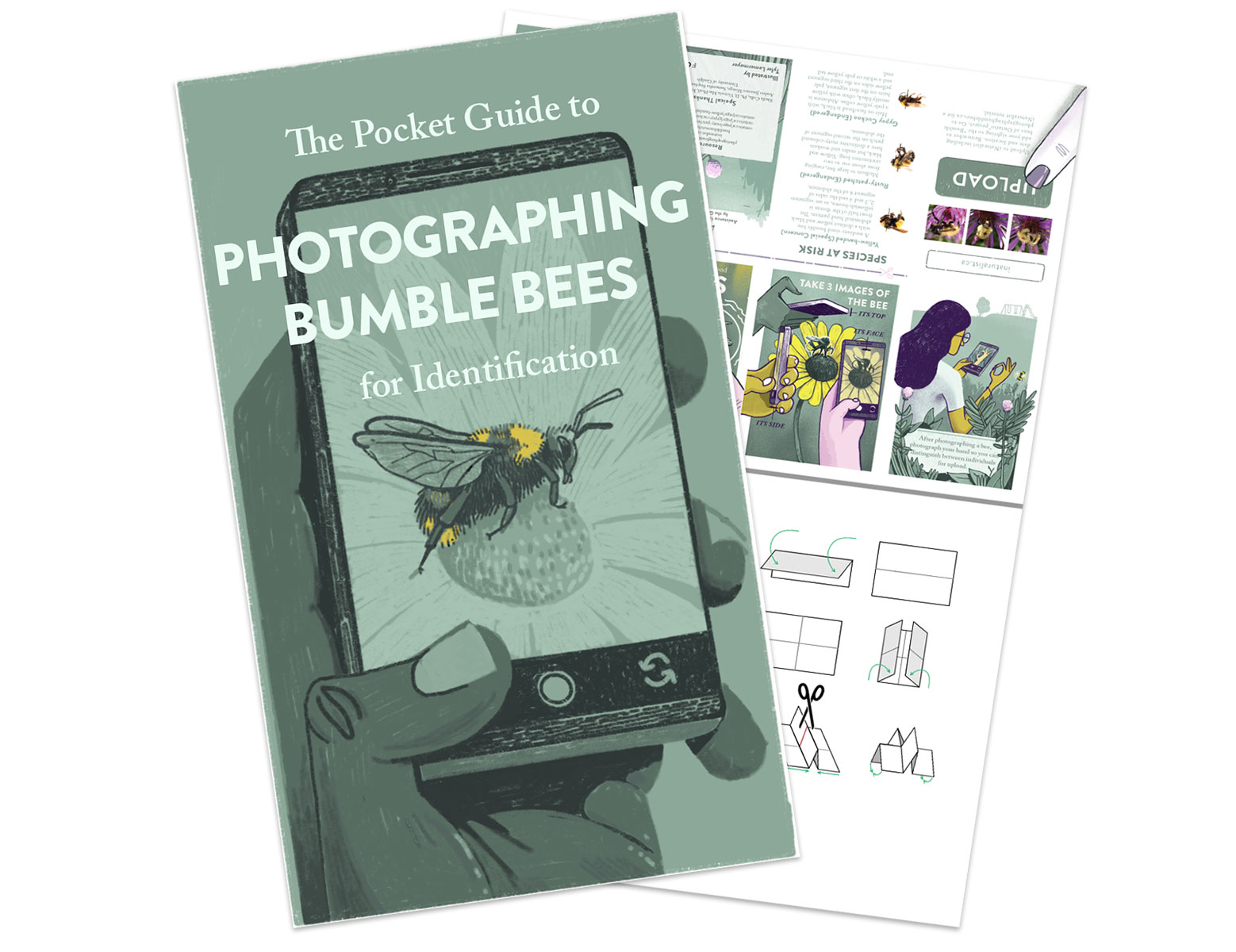 Photographing Bumble Bees Pocket Guide